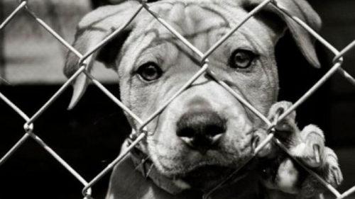 yaralı köpek sahiplendirildi